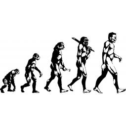 Sticker Évolution de l'Homme